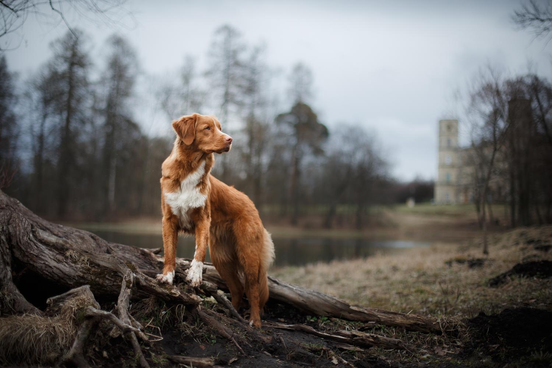 dog-on-ridge