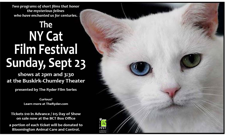 FB Cat Film Festival poster web